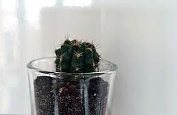 DIY déco : fabriquer des magnets avec des plantes